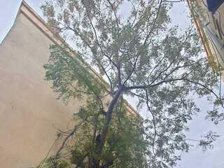 החתול על צמרת העץ