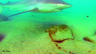 כרישים בתחנת הכוח