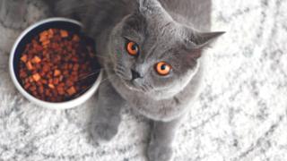 בתיאבון, חתול