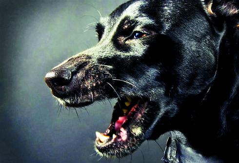 הכלב עשה יותר מדי רעש | צילום המחשה: shutterstock
